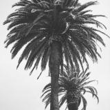 California237