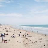 California239